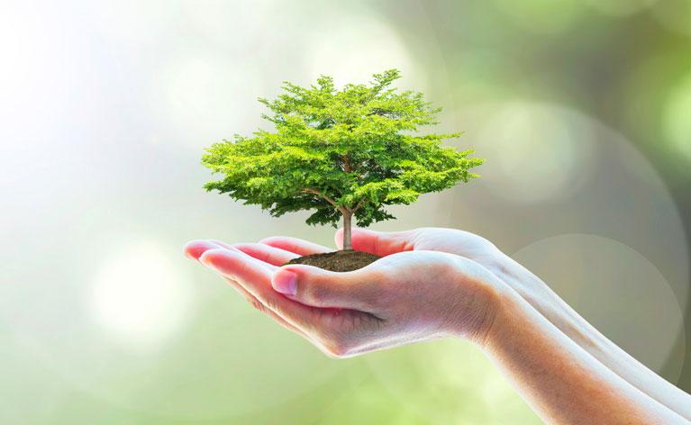 Programme Bio-énergéticien